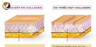 Các nguồn cung cấp collagen dồi dào trong tự nhiên