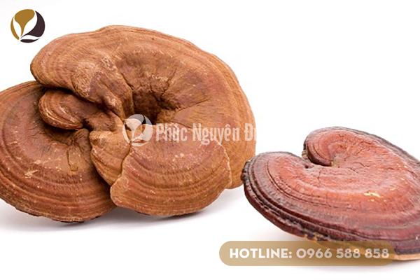 Hình ảnh của nấm linh chi