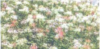 Hoa cảnh và nhà cửa
