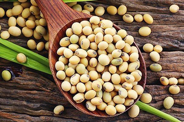 Bột mầm đậu nành bán ở đâu chất lượng tốt?